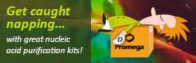 High yields, simple protocols, low price per prep..try Promega kits and relax!