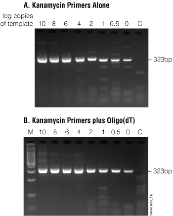 Fewer than five copies of a transcript were detected using the ImProm-II Reverse Transcription System supplemented with Taq DNA Polymerase in coupled RT-PCR.
