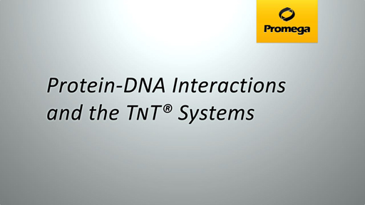Protein DNA Interactions and the TNT Systems